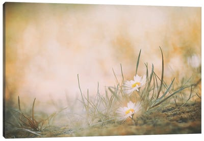 Untitled Canvas Art Print