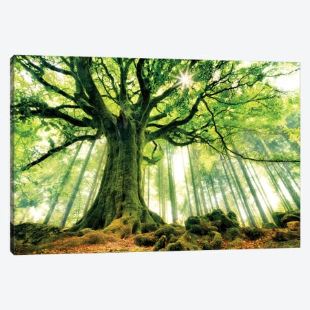 Ponthus' Beech Canvas Print #OXM558} by Christophe Kiciak Canvas Artwork