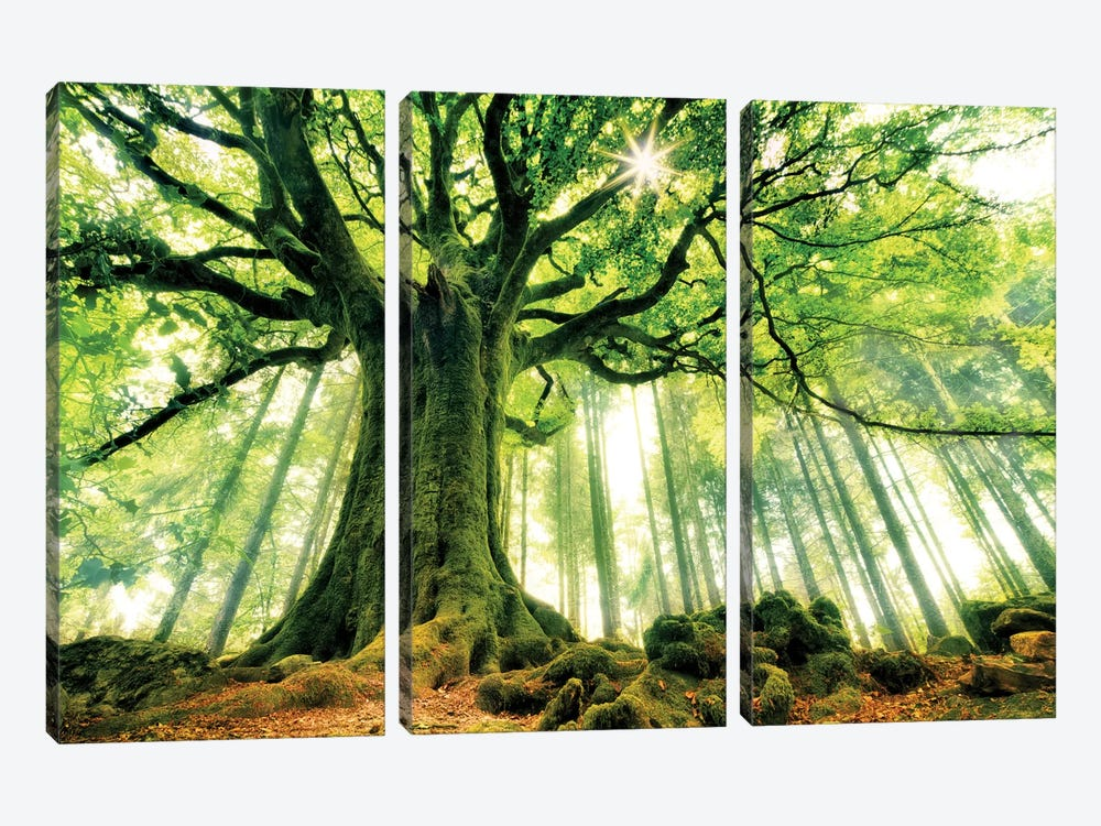 Ponthus' Beech by Christophe Kiciak 3-piece Canvas Wall Art