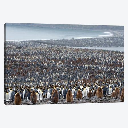 Many Canvas Print #OXM5596} by Kahi Canvas Art