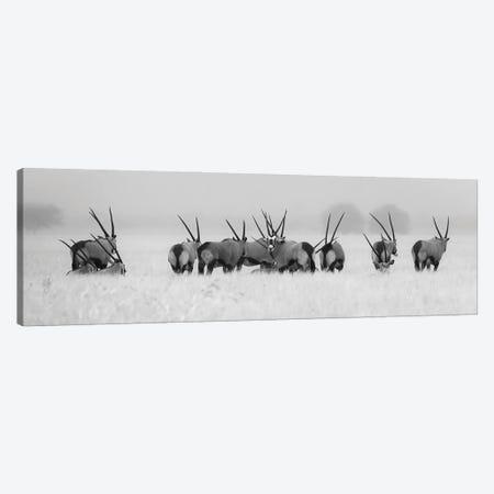Oryx In The Rain Canvas Print #OXM5601} by Kirill Trubitsyn Canvas Art Print