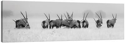 Oryx In The Rain Canvas Art Print