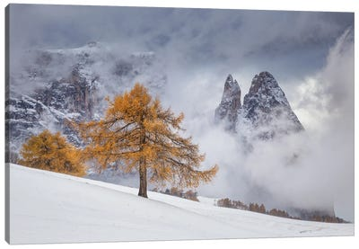 Between Seasons Canvas Art Print
