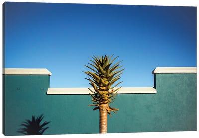 The Desert Blooms Canvas Art Print