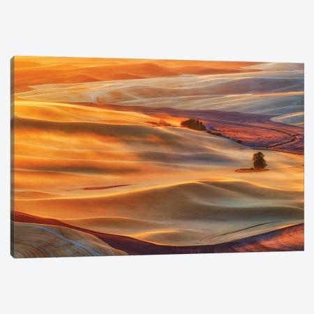 Golden Palouse Canvas Print #OXM5609} by Lydia Jacobs Canvas Art Print