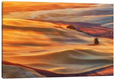 Golden Palouse Canvas Art Print