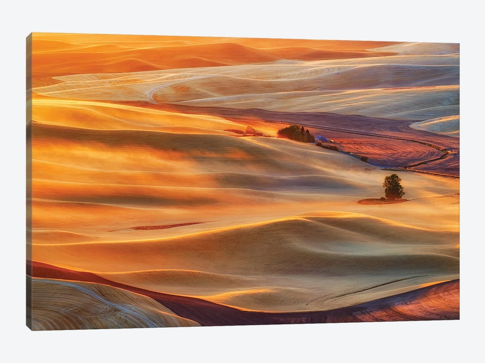 Golden Palouse by Lydia Jacobs 1-piece Canvas Art