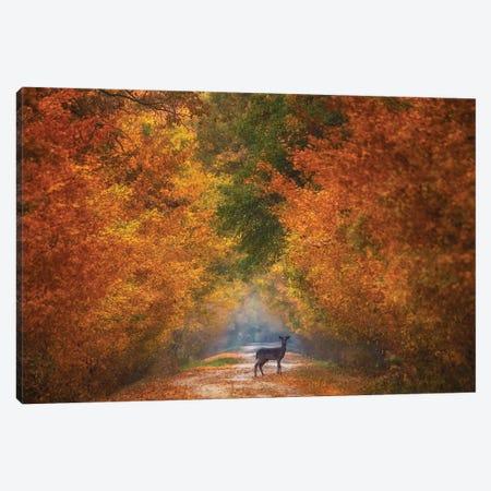 Autumn Fantasy Canvas Print #OXM5611} by Mandru Cantemir Canvas Wall Art