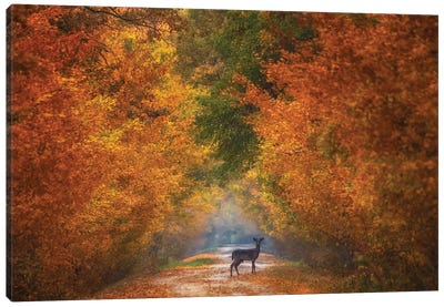 Autumn Fantasy Canvas Art Print