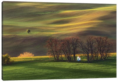 Contemplation In The Fields Canvas Art Print