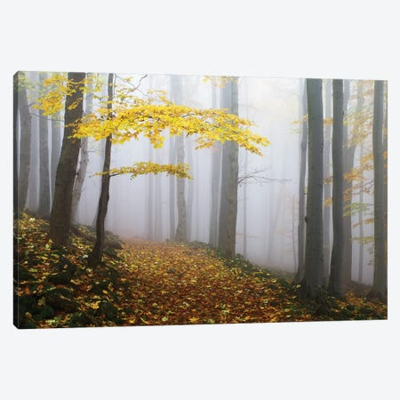 Untitled Canvas Print #OXM5625} by Martin Rak Canvas Wall Art