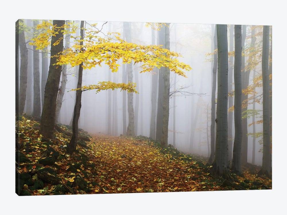Untitled by Martin Rak 1-piece Canvas Artwork