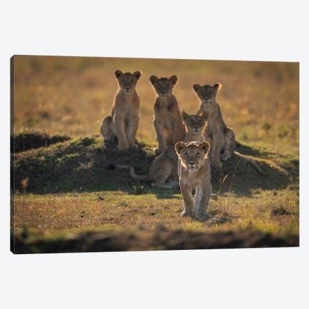 Lonely Cubs Canvas Print #OXM5645} by Mohammad Mirza Canvas Art