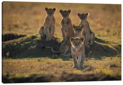 Lonely Cubs Canvas Art Print
