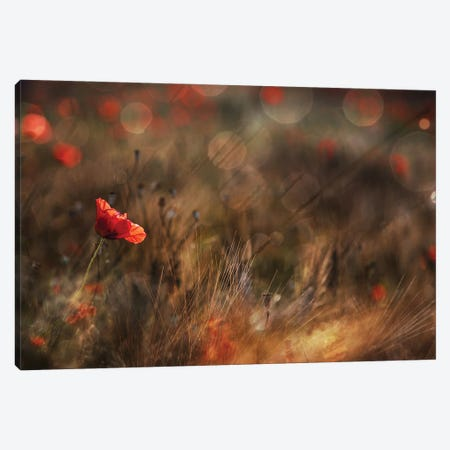 Poppy Canvas Print #OXM5649} by Nicodemo Quaglia Canvas Print