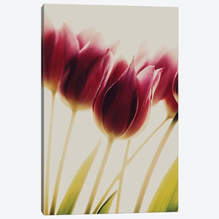 Tulips Canvas Print #OXM5675} by Rosalinde Philippin-Lipscomb Canvas Print