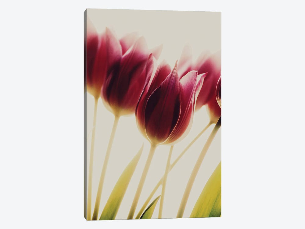 Tulips by Rosalinde Philippin-Lipscomb 1-piece Canvas Art Print