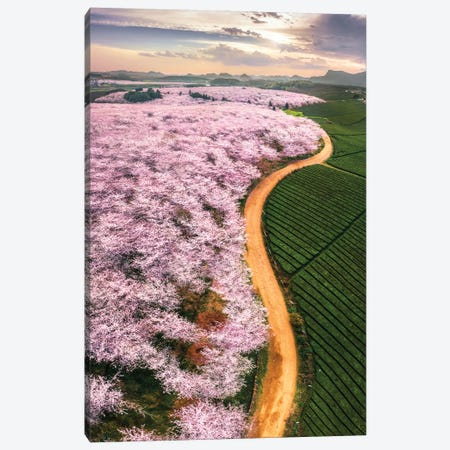 Cherry Blossoms Canvas Print #OXM5696} by Tianqi Canvas Print