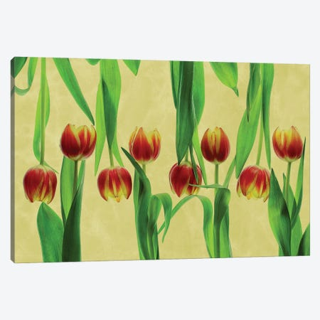 Tulips Canvas Print #OXM5705} by Udo Dittmann Canvas Art Print