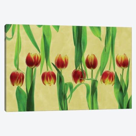 Tulips Canvas Print #OXM5705} by Udo Dittmann Canvas Art Print