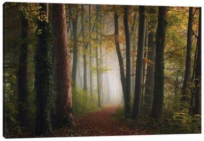 Autumn Colorful Forest Canvas Art Print