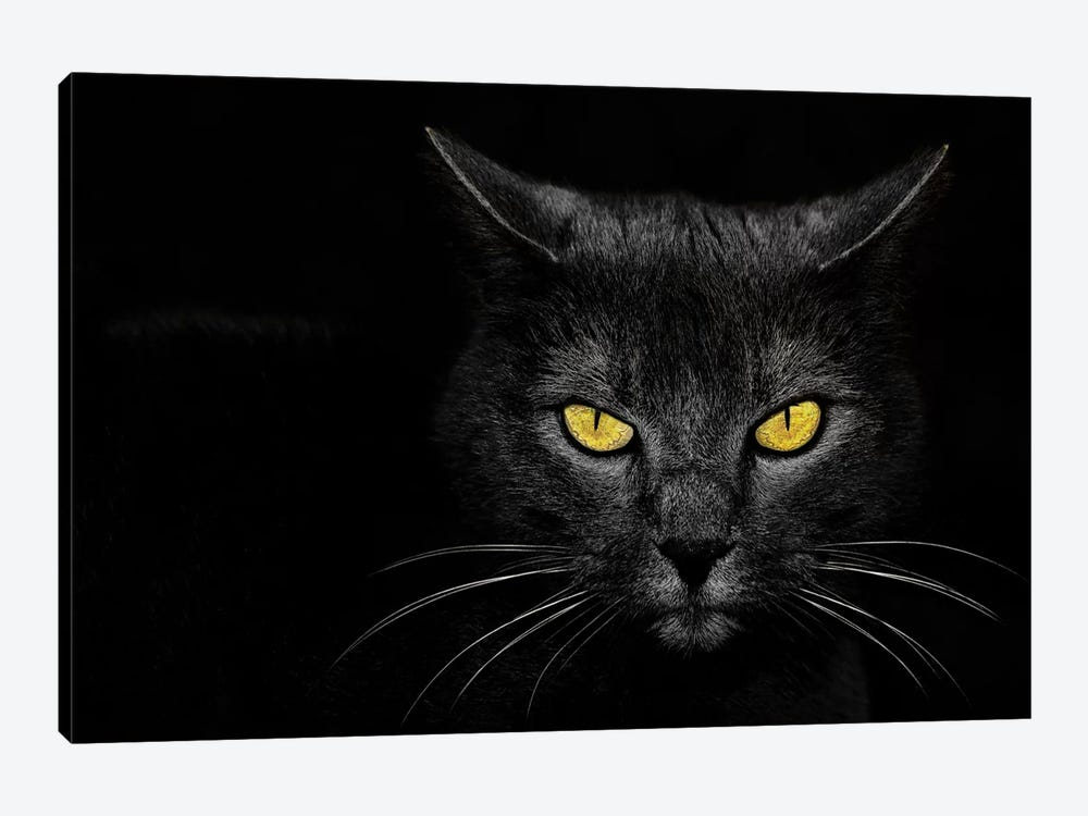 Monster Kill by Davorin Baloh 1-piece Canvas Art Print