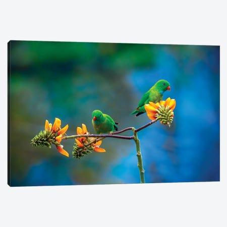 Green Beauty's Canvas Print #OXM5772} by Abdul Saleem Canvas Print
