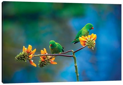 Green Beauty's Canvas Art Print