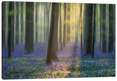 Daydreaming Of Bluebells Canvas Art Print