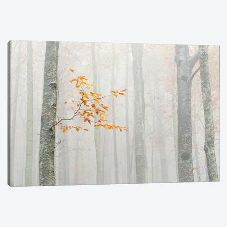 Autumn 2020 Canvas Print #OXM5780} by Aglioni Simone Canvas Art