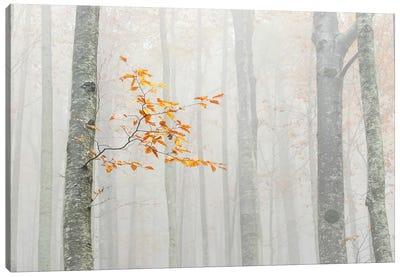 Autumn 2020 Canvas Art Print