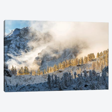 Golden Larches Canvas Print #OXM5791} by Ales Krivec Canvas Print