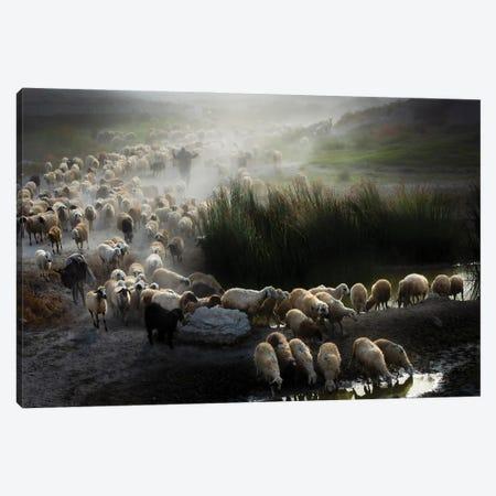 Shepherd Canvas Print #OXM5800} by Ali Can Canvas Art Print