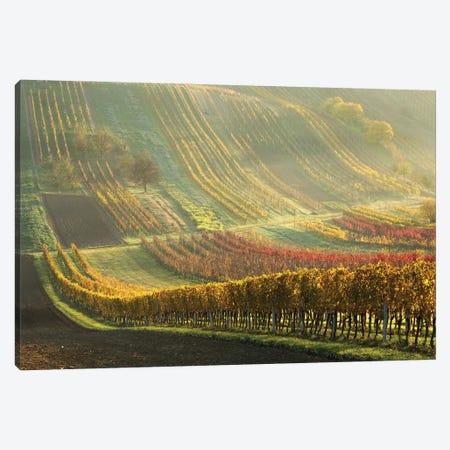Autumn Vineyards Canvas Print #OXM5808} by Anna Pakutina Canvas Print