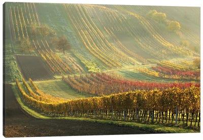 Autumn Vineyards Canvas Art Print