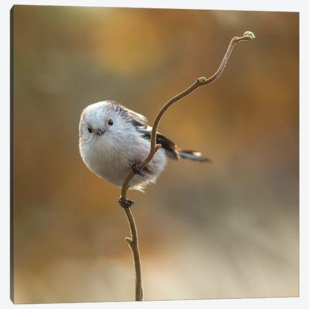 A Rare Bird In Our Garden Canvas Print #OXM5811} by Annie Keizer Canvas Artwork