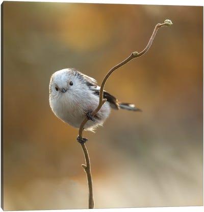 A Rare Bird In Our Garden Canvas Art Print