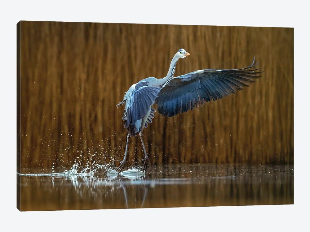 Ballet On The Water by Annie Poreider 1-piece Canvas Art