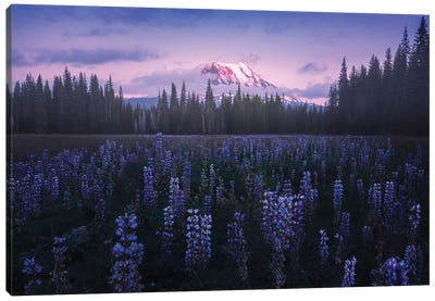 Adam's Lupine Canvas Art Print