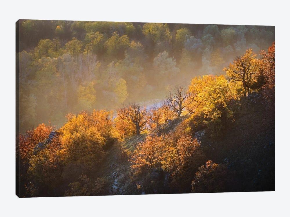 Autumn Trees by Burger Jochen 1-piece Canvas Art Print