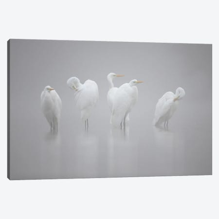 Les Dames Blanches Canvas Print #OXM5845} by Cedric Join Canvas Art