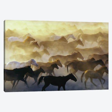 Wild Horses Canvas Print #OXM5875} by Emir Bagci Canvas Print