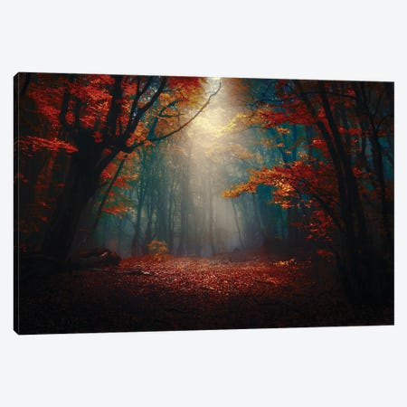 Sunset In The Forest Canvas Print #OXM5877} by Fabrizio Massetti Canvas Print