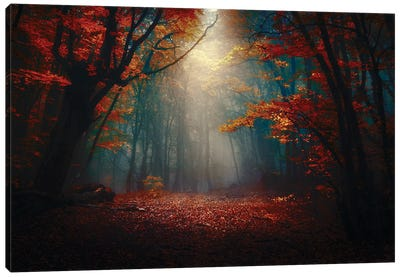 Sunset In The Forest Canvas Art Print