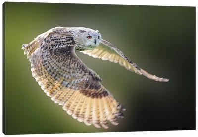 Flying Owl Canvas Art Print