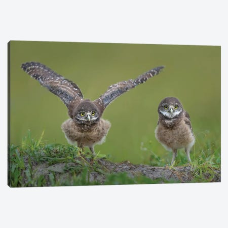 Learning To Fly Canvas Print #OXM5892} by Greg Barsh Canvas Art