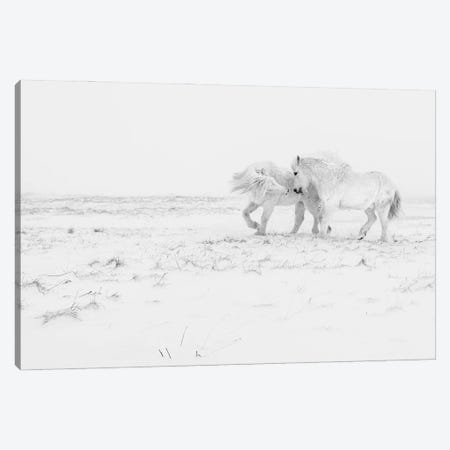 Horse Dance Canvas Print #OXM5896} by Haim Rosenfeld Canvas Print