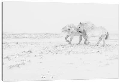 Horse Dance Canvas Art Print