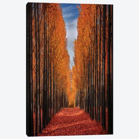 Colorful Autumn Canvas Print #OXM5897} by Hamed Qane Art Print
