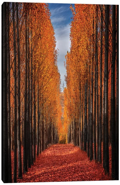 Colorful Autumn Canvas Art Print